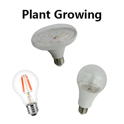 Plant Growing Bulb